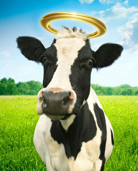 HOLY COW! Special Pricing on PA PT Direct Access Courses!